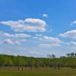 Spring landscape — Stock Photo #6455596