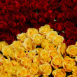 Yellow red maroon rose flower cluster — Stock Photo