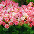 Pink rose flower cluster - Stock Photo