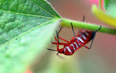 Red white insect pest on plants — Stock Photo