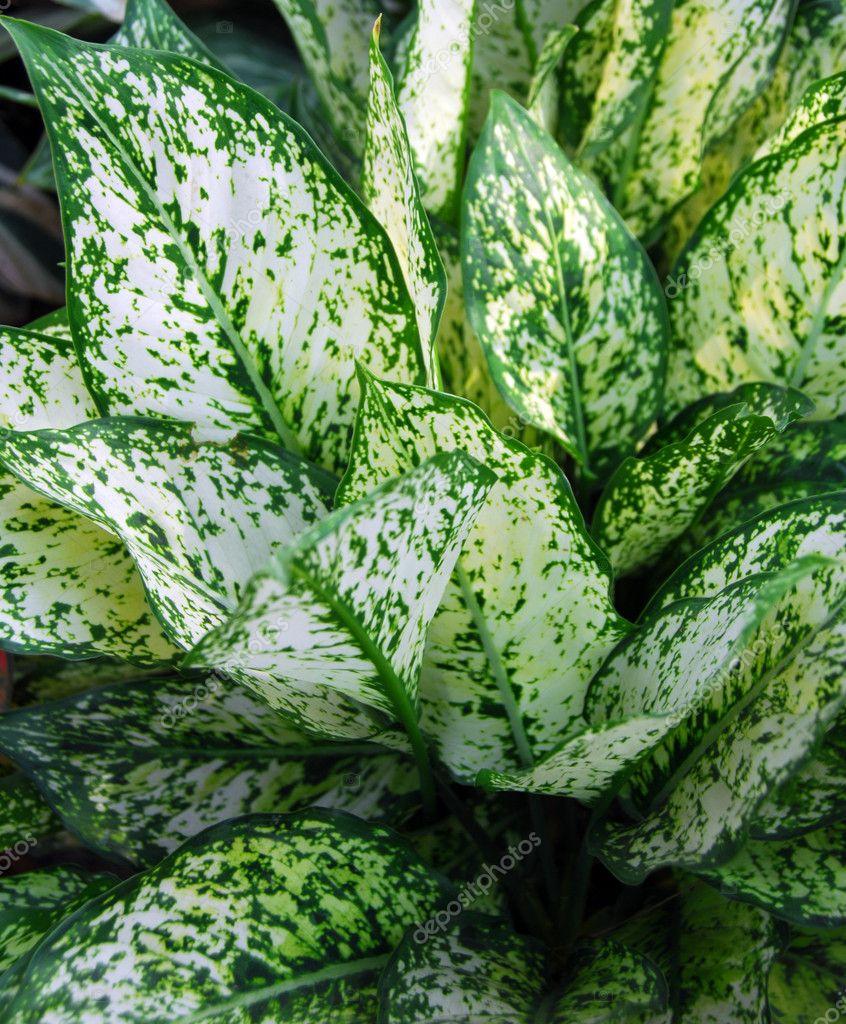 Hojas verdes en las plantas ornamentales foto de stock for Todas las plantas ornamentales