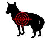 Coyote crosslines — Stock Photo