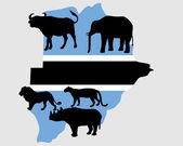 Big Five Botswana — Stock Photo