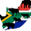 Stock Photo: Big Five South Africa