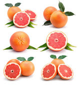 Set of grapefruit fruits with cuts and green leaf isolated — Stock Photo