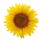 向日葵与心脏中心 — 图库照片