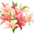 Stock Vector: Bunch of pink lilies