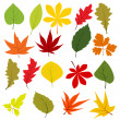 Collection of different autumn leaves — Vector de stock