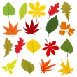 Collection of different autumn leaves - Stock Vector
