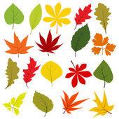 Collection of different autumn leaves — Stock Vector