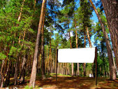 Signpost in the forest — Stock Photo