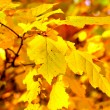 Autumn foliage — Stock Photo #6302272