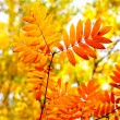 Autumn foliage — Stock Photo #6302312