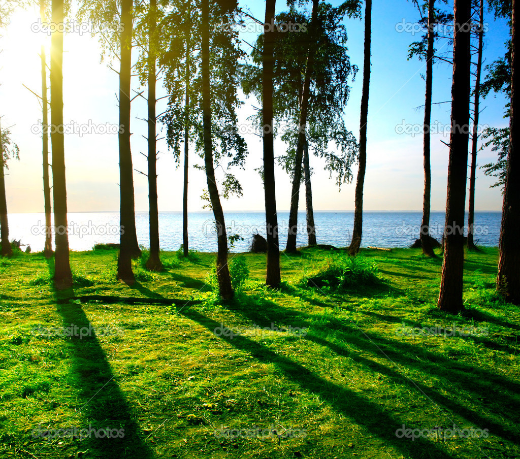 Forest landscape — Stock Photo © sabphoto #6302171