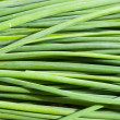 Stock Photo: Green onion leaves