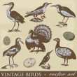 Vintage birds illustrations. Vector set — Stock Photo