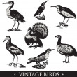 Vintage  birds - Stock Photo