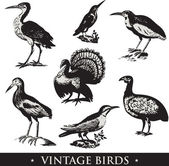 Vintage birds — Stock Photo
