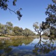 Water Hole (Billabong) - Stock Photo