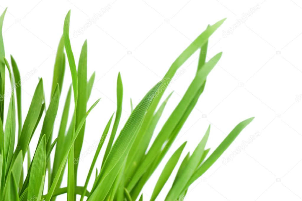 Fresh green grass isolated on white background — Stock Photo #5392998