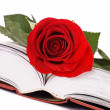 Beautiful red rose on the book — Stock Photo