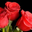Royalty-Free Stock Photo: Red rose on black background