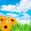 Spring flowers in the grass against the sky - Stock Photo