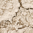 Details of the dry grounds - Stock Photo