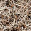 The ant hill  as a background - Stock Photo