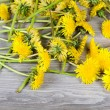 Yellow dandelion on a wooden surface - Stock Photo
