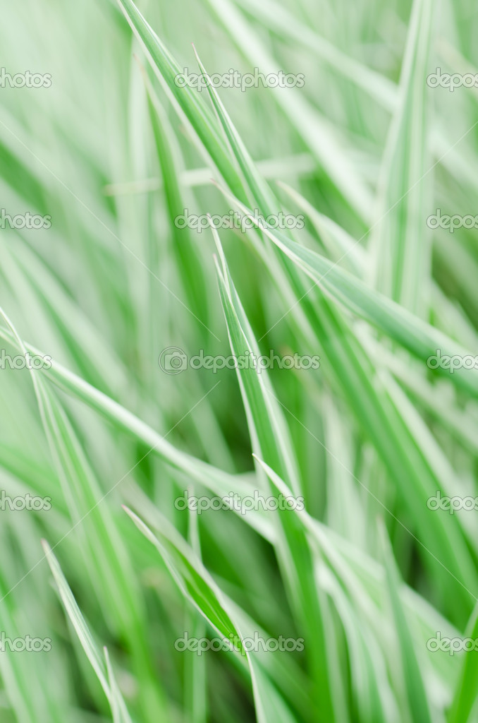 The fresh green grass as a  background — Stock Photo #5761639