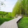 The old wooden bridge in wood - 图库照片