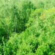 Foliage of green wood from height — Stock Photo