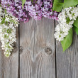 Beautiful lilac - Stock Photo