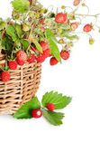 Fresh wild strawberry — Stock Photo