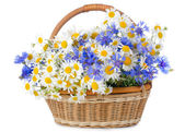 Beautiful flowers in a basket isolated on white — Stock Photo