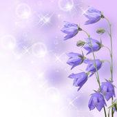 Beautiful blue flowers campanula — Stock Photo