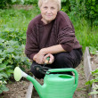 The elderly woman works on a kitchen garden - Stock Photo