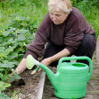 The elderly woman works on a kitchen garden — Stock Photo #6141283