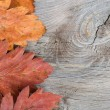 Stock Photo: Autumn Leaves over wooden background.