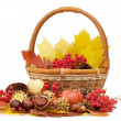 Stockfoto: Autumn leaves and fruits isolated
