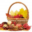 Stock Photo: Autumn leaves and fruits isolated