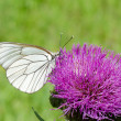 White butterfly on lilac flower — Photo