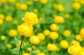 Prachtige lentebloemen — Stockfoto