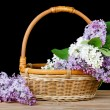 Stock Photo: Lilac bouquet in wattled basket