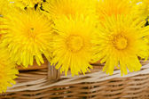 Yellow dandelion — Stock fotografie