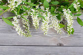 Bird cherry branch on wooden surface — Stock Photo