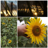 Collage aux tournesols — Photo