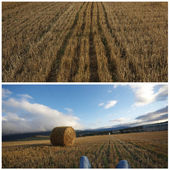 Collage agriculture — Stock Photo
