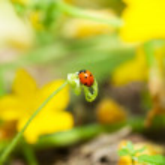 Ladybug — Stock Photo #6548012
